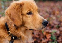 Dog-Grooming-Essentials-According-to-Expert-Groomers-on-HomeTalk