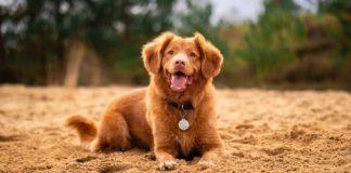 Creative-Ways-to-Use-Dog-QR-Code-Tag-&-The-Benefits-hometalk-news