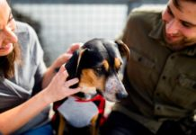 Professions-You-Can-Take-in-the-Pet-Care-Industry--on-HomeTalk