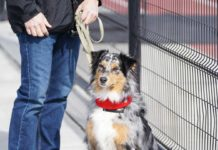 Why-You-Should-Go-for-a-Walk-with-Your-Dog-on-hometalk-news